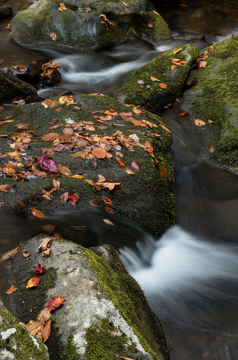Photograph Let It Flow by Mia Lisa Anderson on 500px