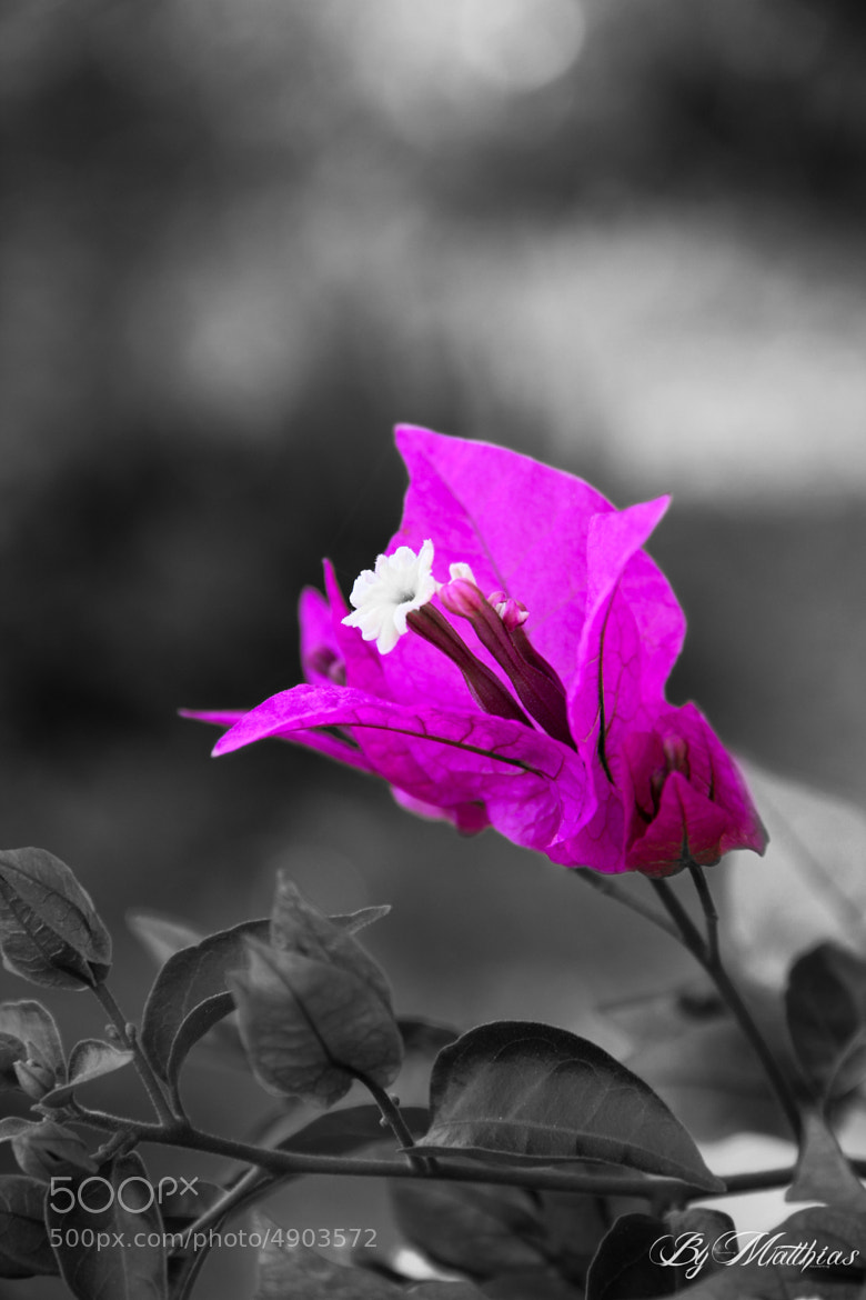 Photograph Colorkey Flower by Matthias Frank on 500px