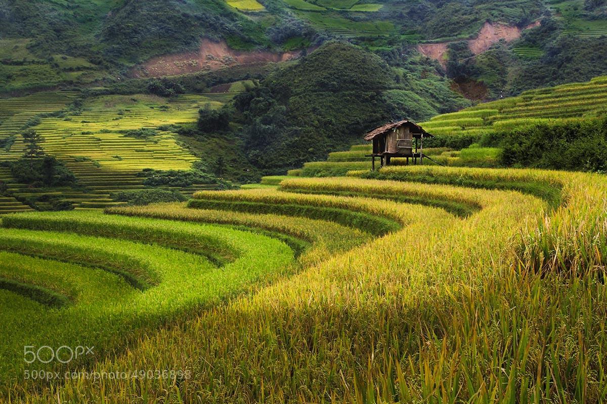 Photograph MÙ CANG CHẢI - VIỆT NAM by Tuan Nguyen Anh on 500px