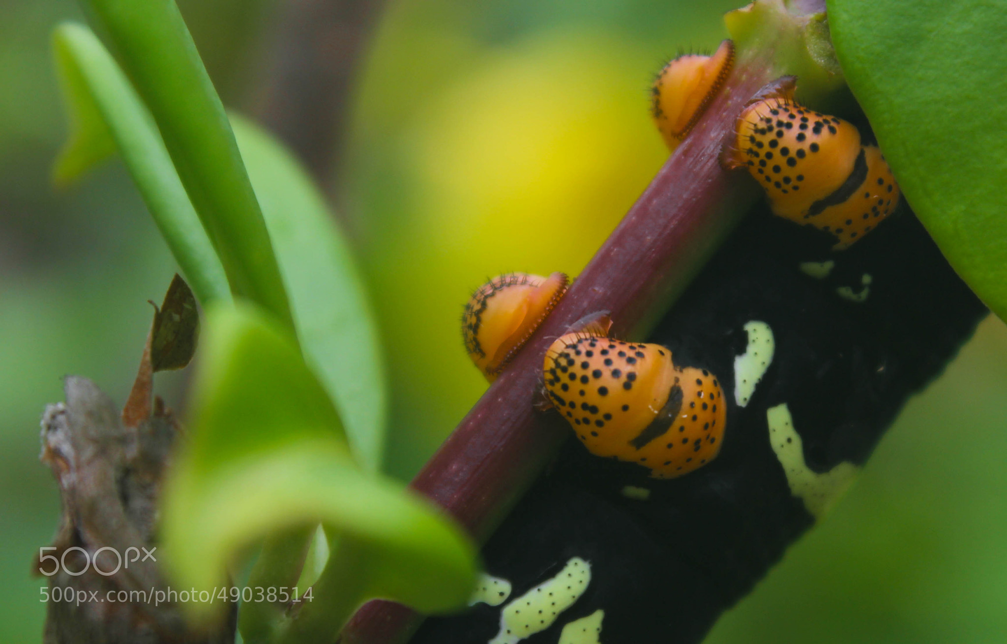 Photograph caterpillar grip. by Adriana Vazquez on 500px