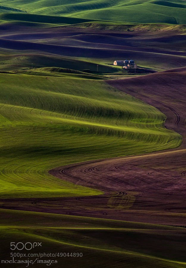 "Photograph "" AGAINST THE GRAIN "" Steptoe Butte- Palouse by noel casaje on 500px"