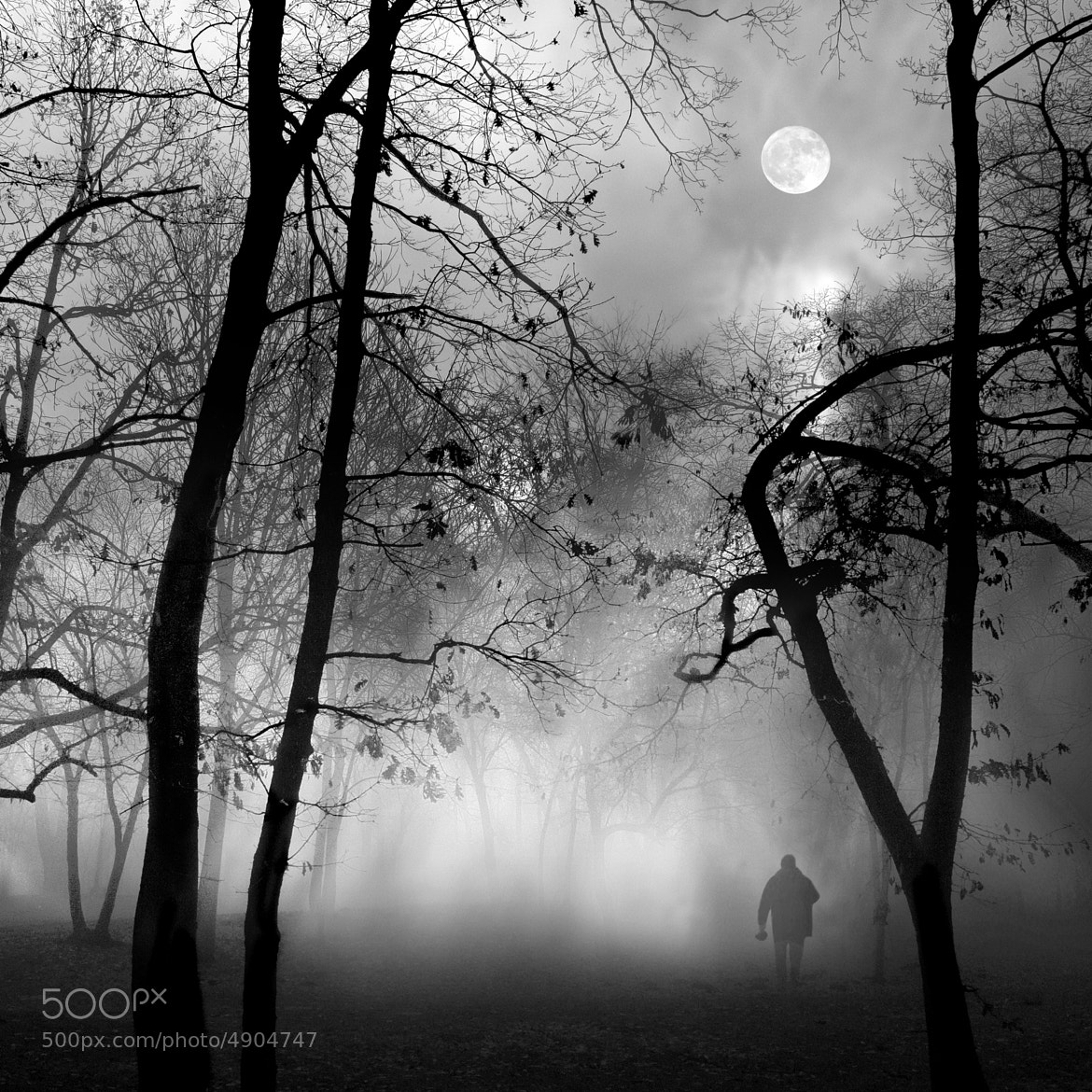 Photograph Into the Fog III by Dragan Todorović on 500px