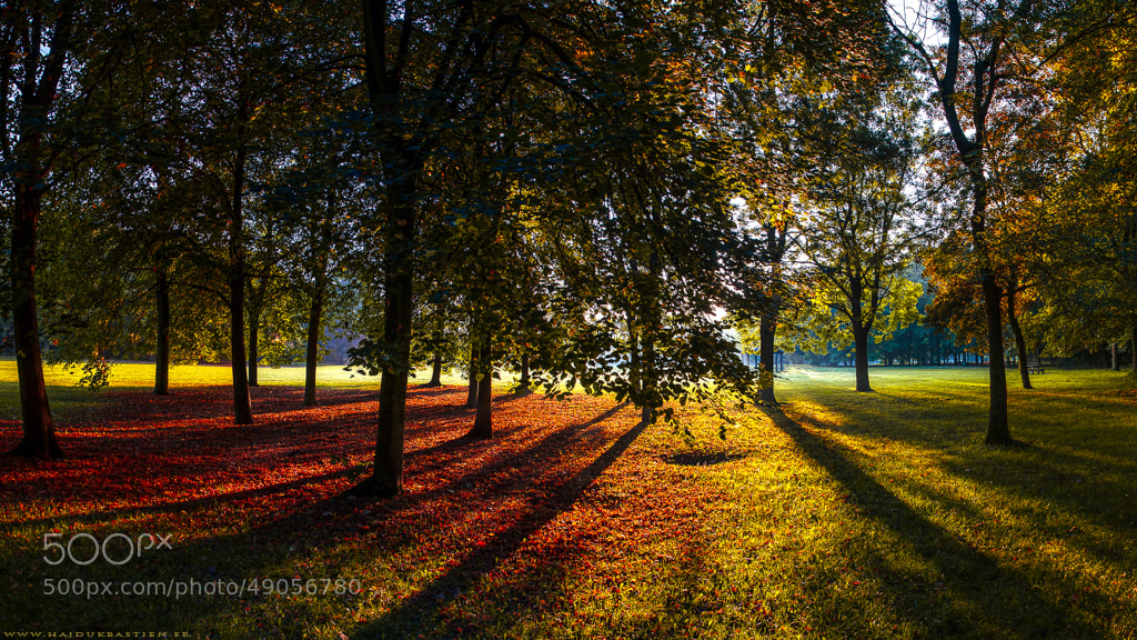 Photograph Autumn rises by Bastien HAJDUK on 500px