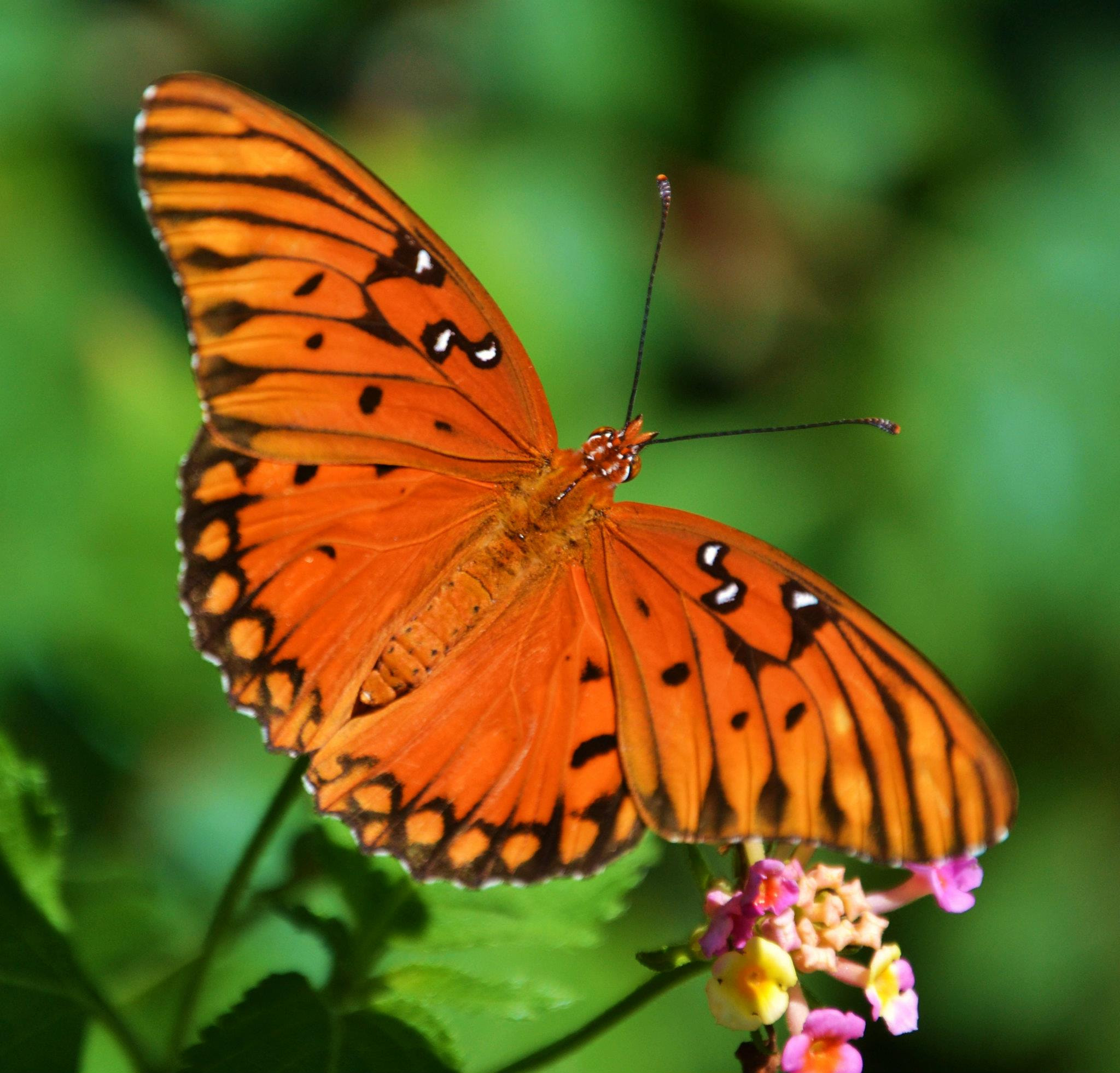 Photograph Mariposa by Michael Fitzsimmons on 500px