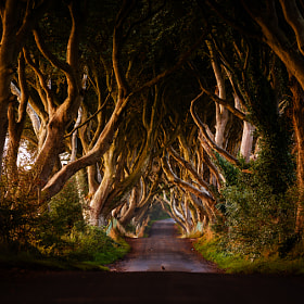 Dark Hedges by Davide Arizzi on 500px.com
