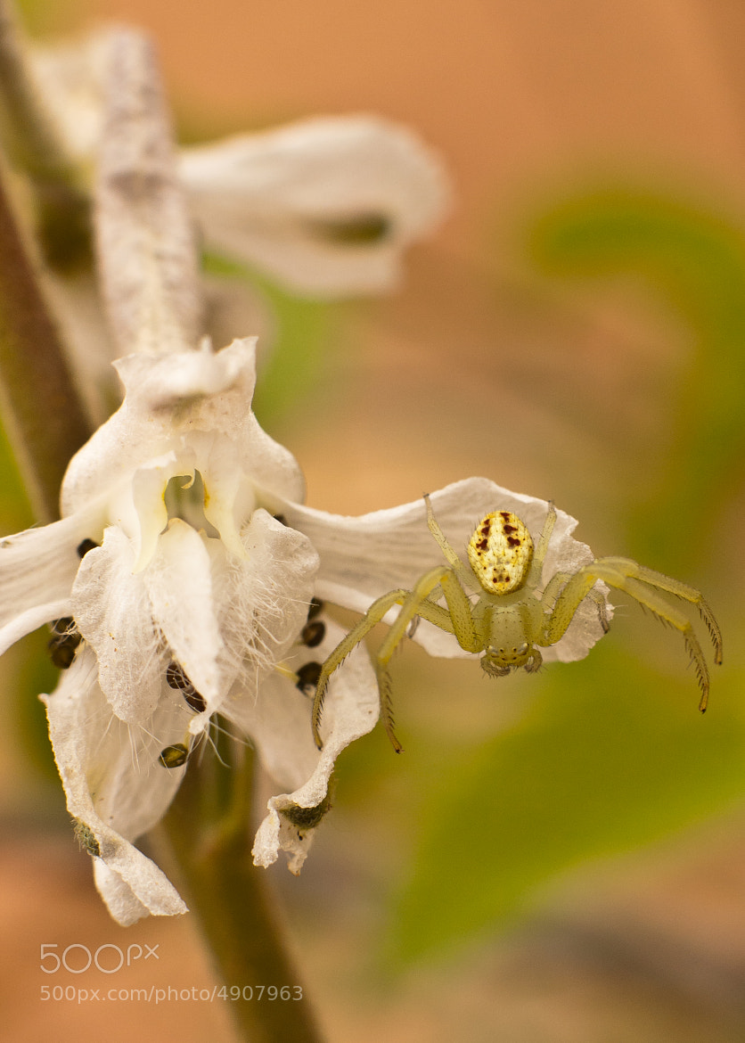 Photograph Crab on Delphinium by Perry  Eckhardt on 500px