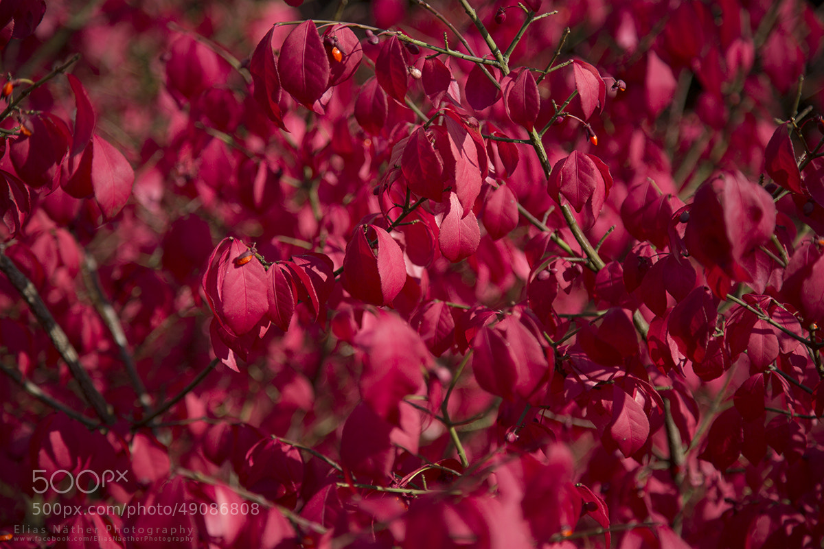 Photograph Red by Elias Näther on 500px