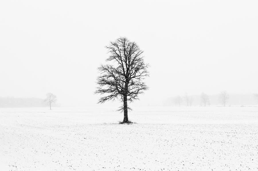 Photograph Tree by Marc Hodges on 500px