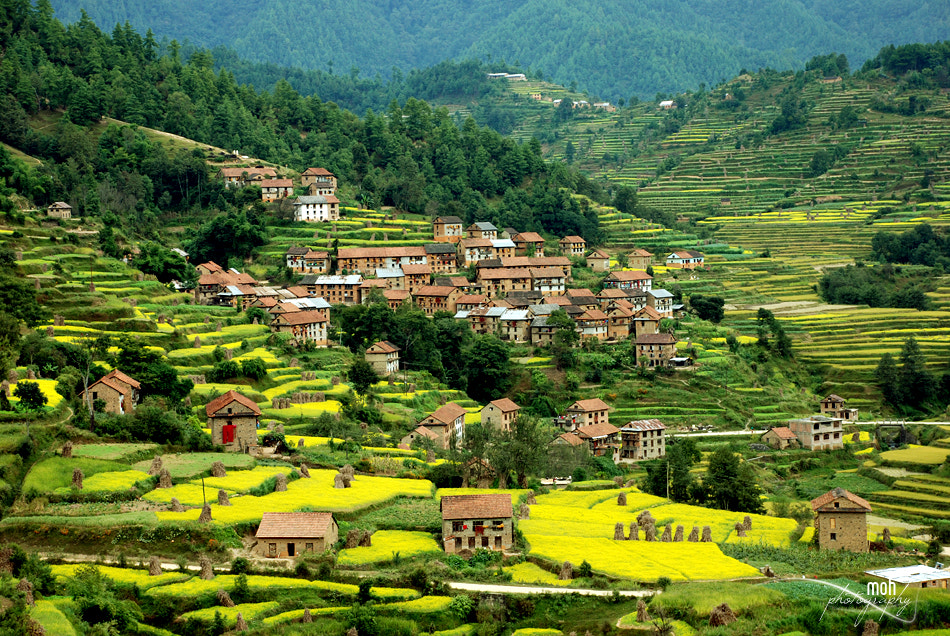 Photograph Palung Village, Nepal by Mohan Duwal on 500px