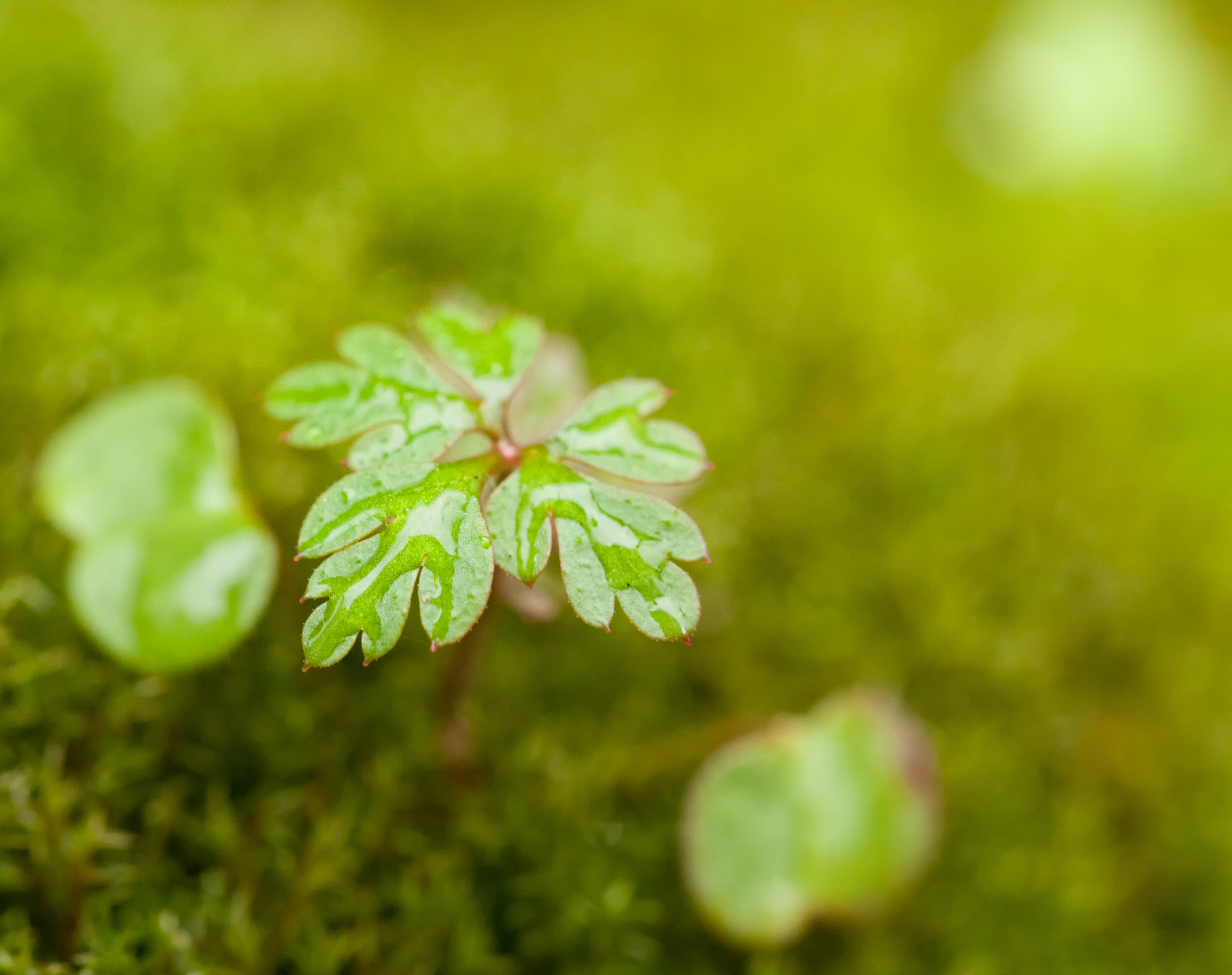 Photograph Moss Story by Joseph Calev on 500px