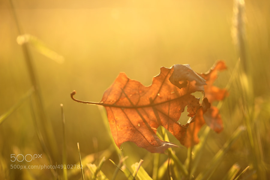 Photograph One Day in Autumn. by Sabrina Rohwer on 500px