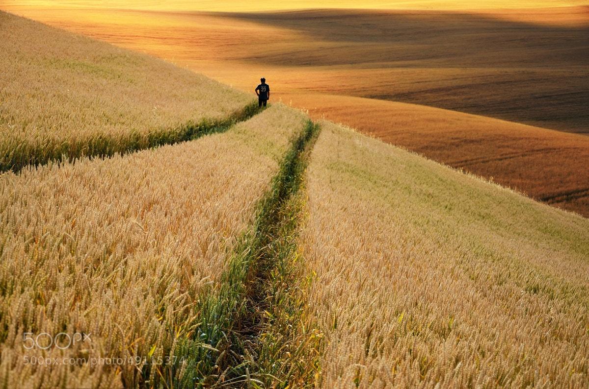 Photograph Fields of Gold by Peter Kováč on 500px