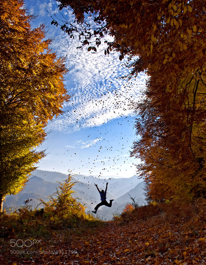 Photograph Fall of the leaves by Mladen Parvanov on 500px
