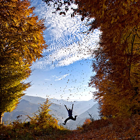 Fall of the leaves by Mladen Parvanov (Demiman)) on 500px.com