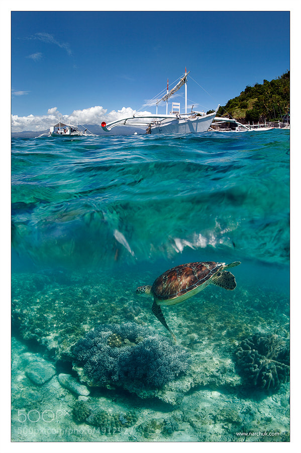 Photograph Dive to Philippines by Andrey Narchuk on 500px