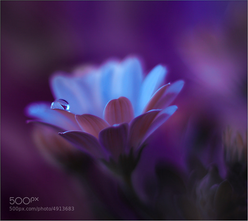 Photograph \\\o/// by Juliana Nan on 500px