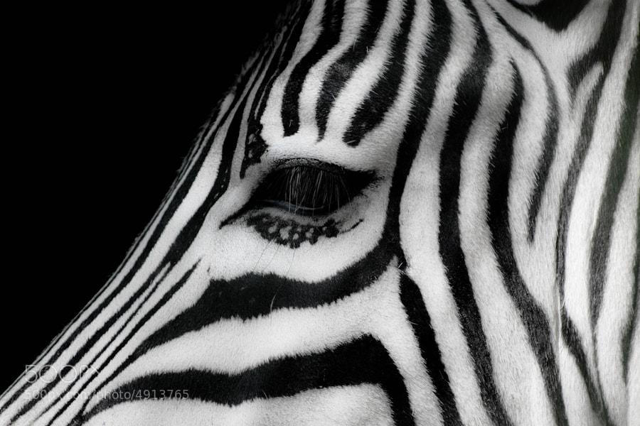 Eye by Daniele Lembo (DanieleLembo) on 500px.com