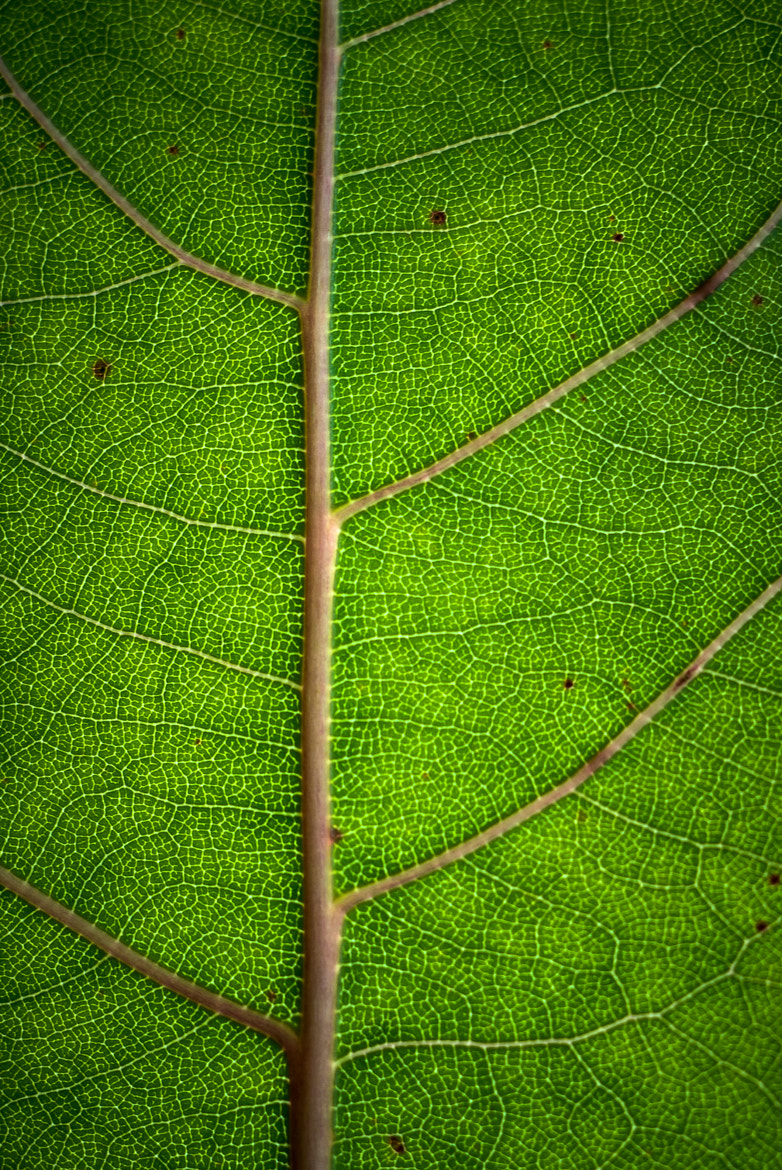 Photograph Patterns by Stevan Tontich on 500px