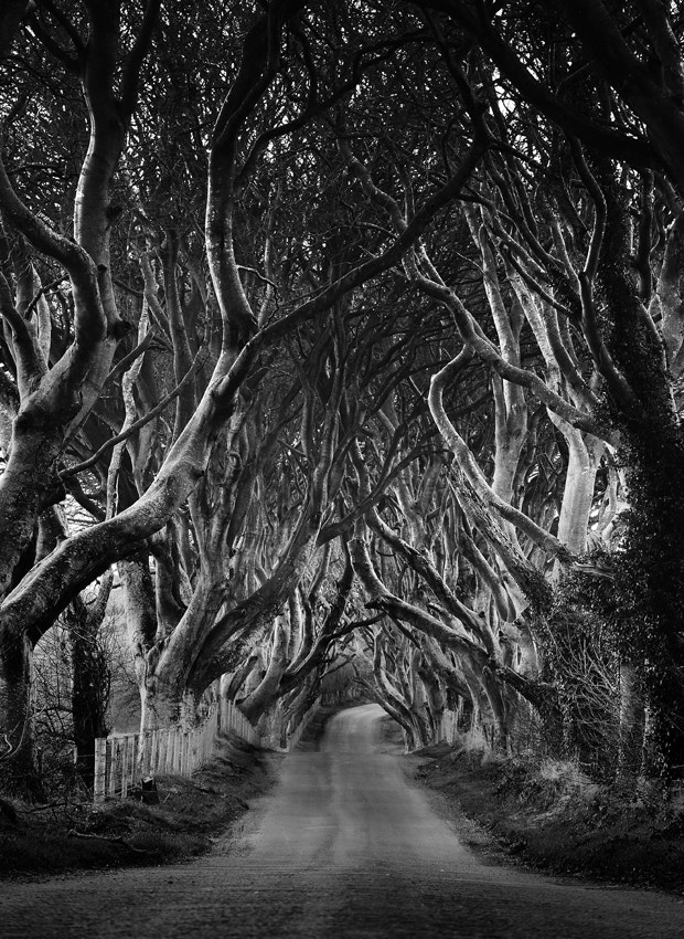 Photograph The Dark Hedges by Tommy McDermott on 500px