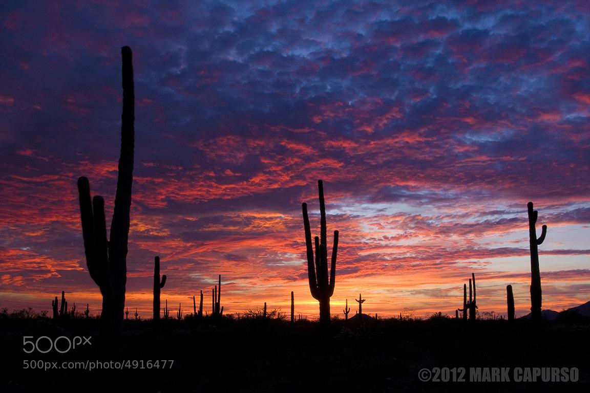 Photograph Sonoran Sky by Mark Capurso on 500px