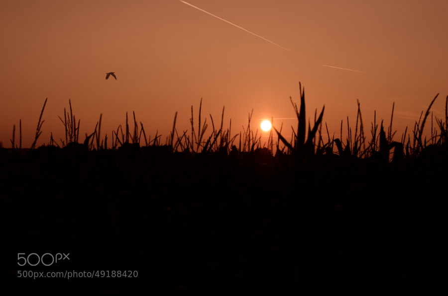 Photograph sunset in autumn by Gunter Werner on 500px