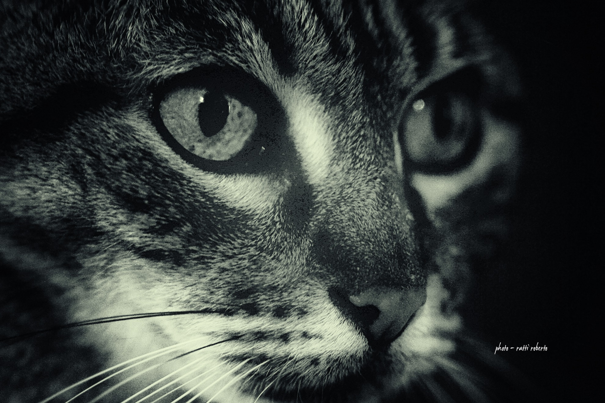 Photograph cats by Ratti Roberto on 500px