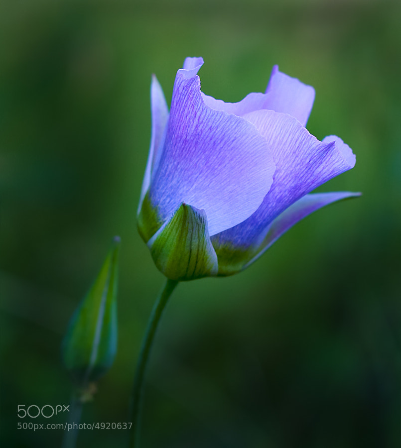 Photograph Soft Blue by Charles Davey on 500px