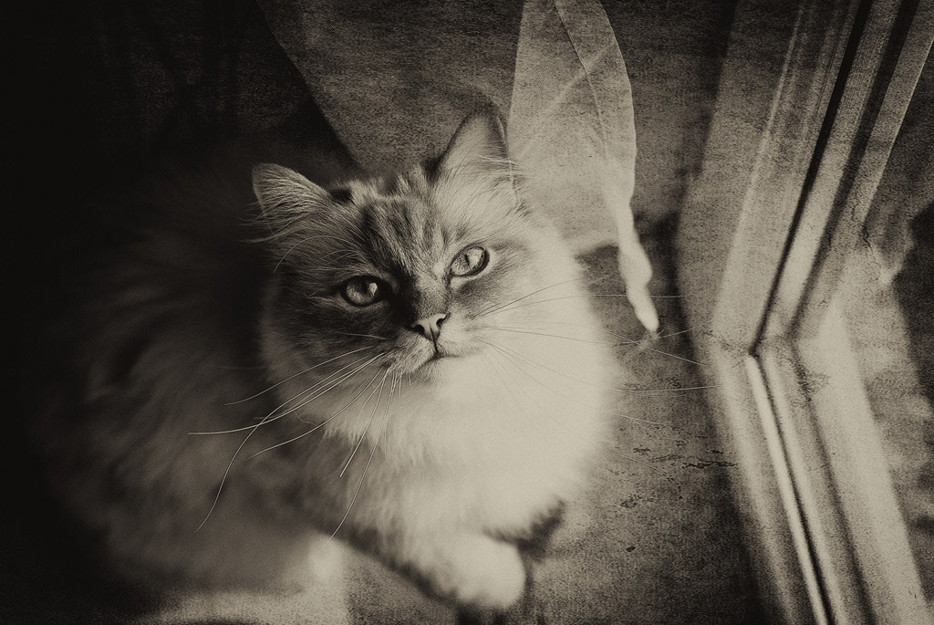 Photograph my Cat by White Cat on 500px
