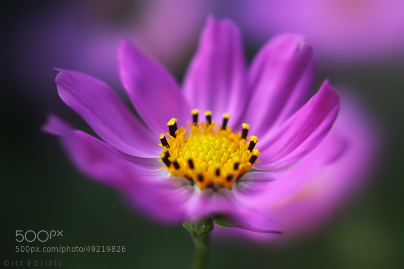 Photograph color world by IRAKLI DOLIDZE on 500px