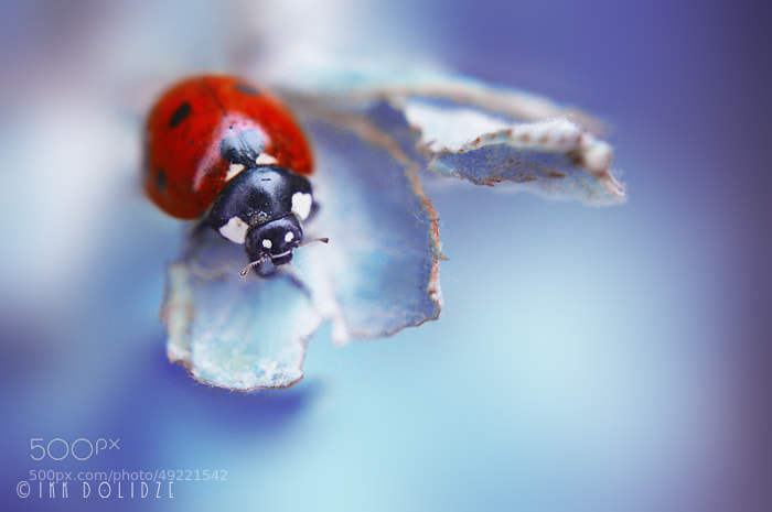 Photograph ladybird by IRAKLI DOLIDZE on 500px