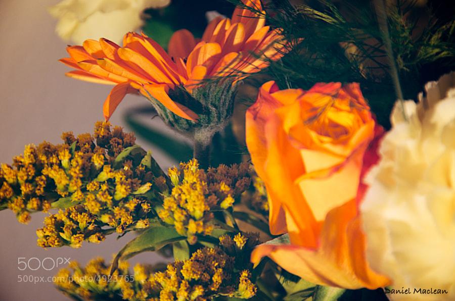 Orange & Gold by Daniel Maclean (DanielMaclean)) on 500px.com