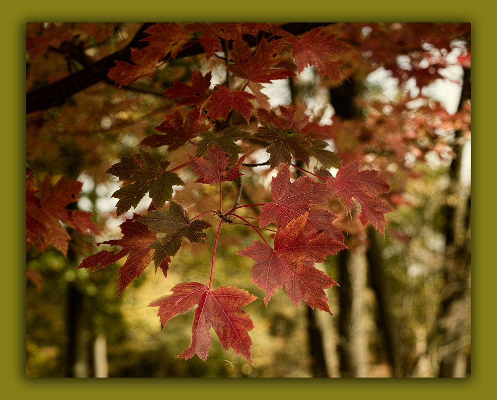 Photograph Leaves by Sherry Galey on 500px