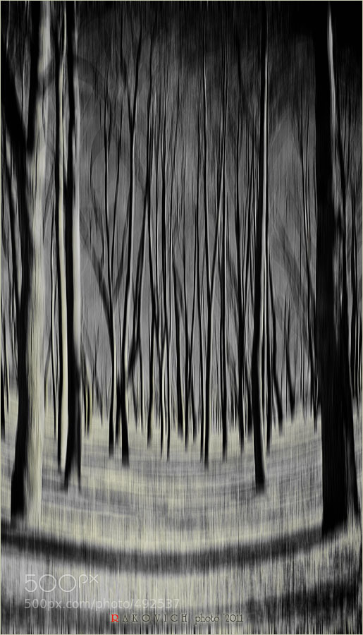 Photograph The Moon Forest by Rakovich  on 500px