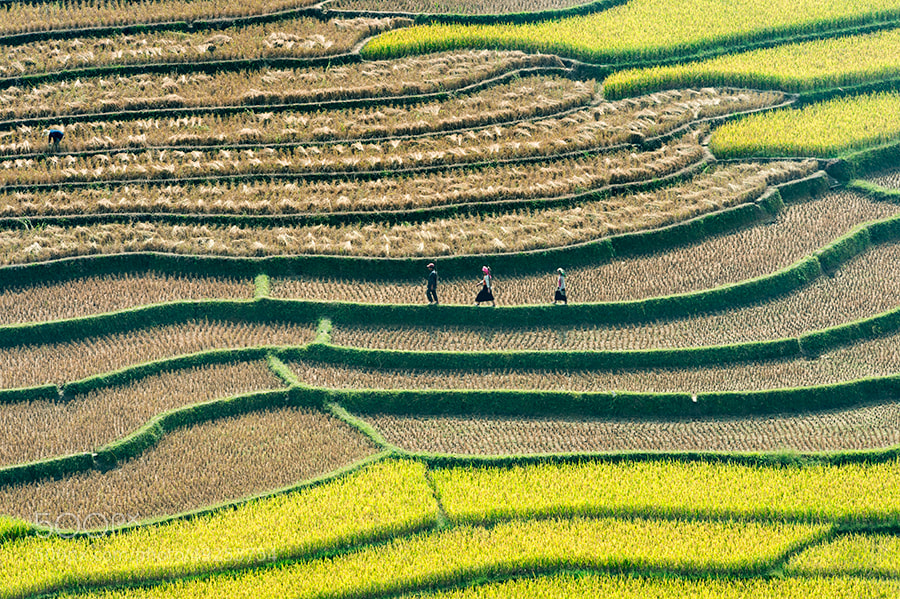 Photograph Untitled by Hai Thinh on 500px