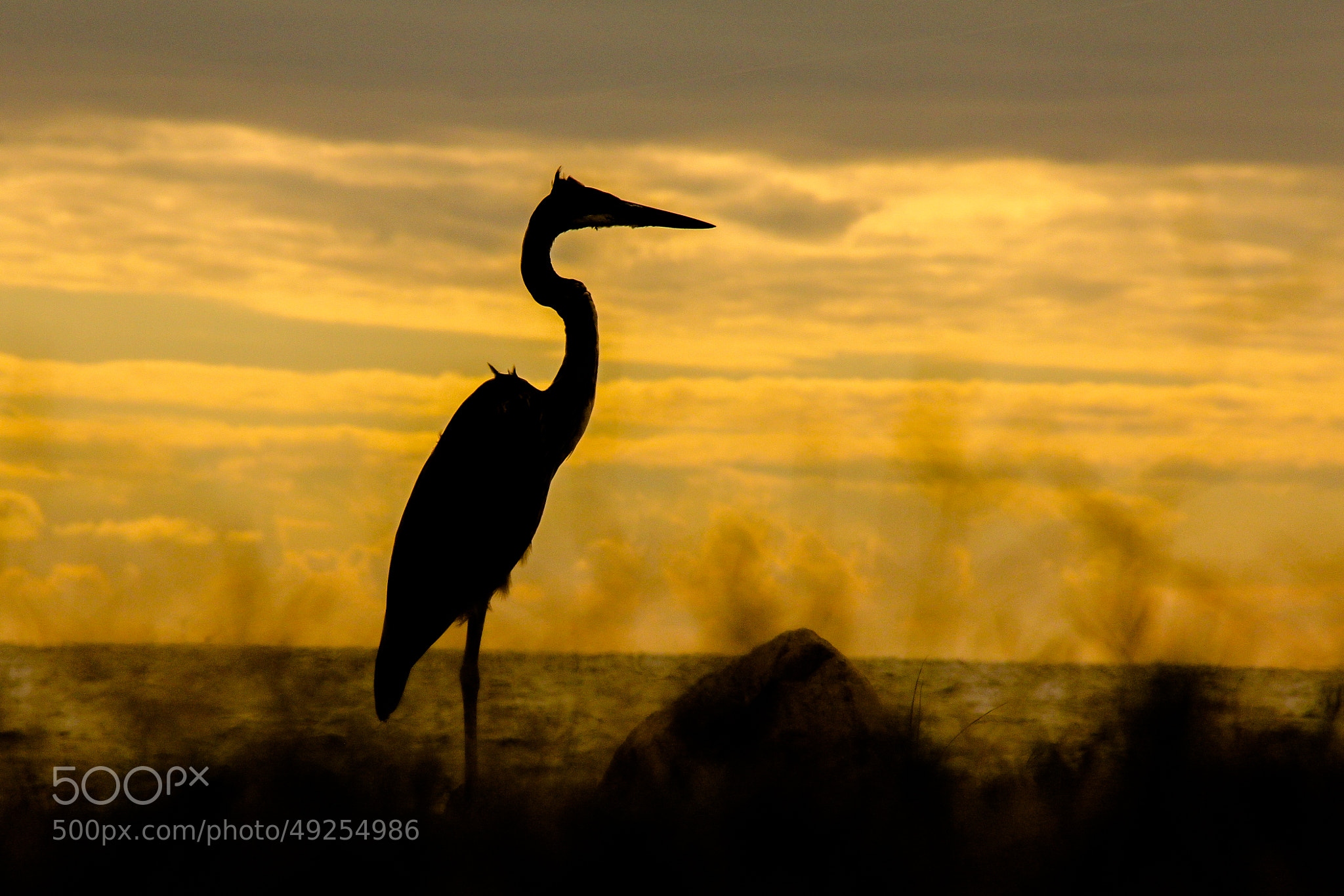 Photograph Heron Silhouette by Andy Operchuck on 500px