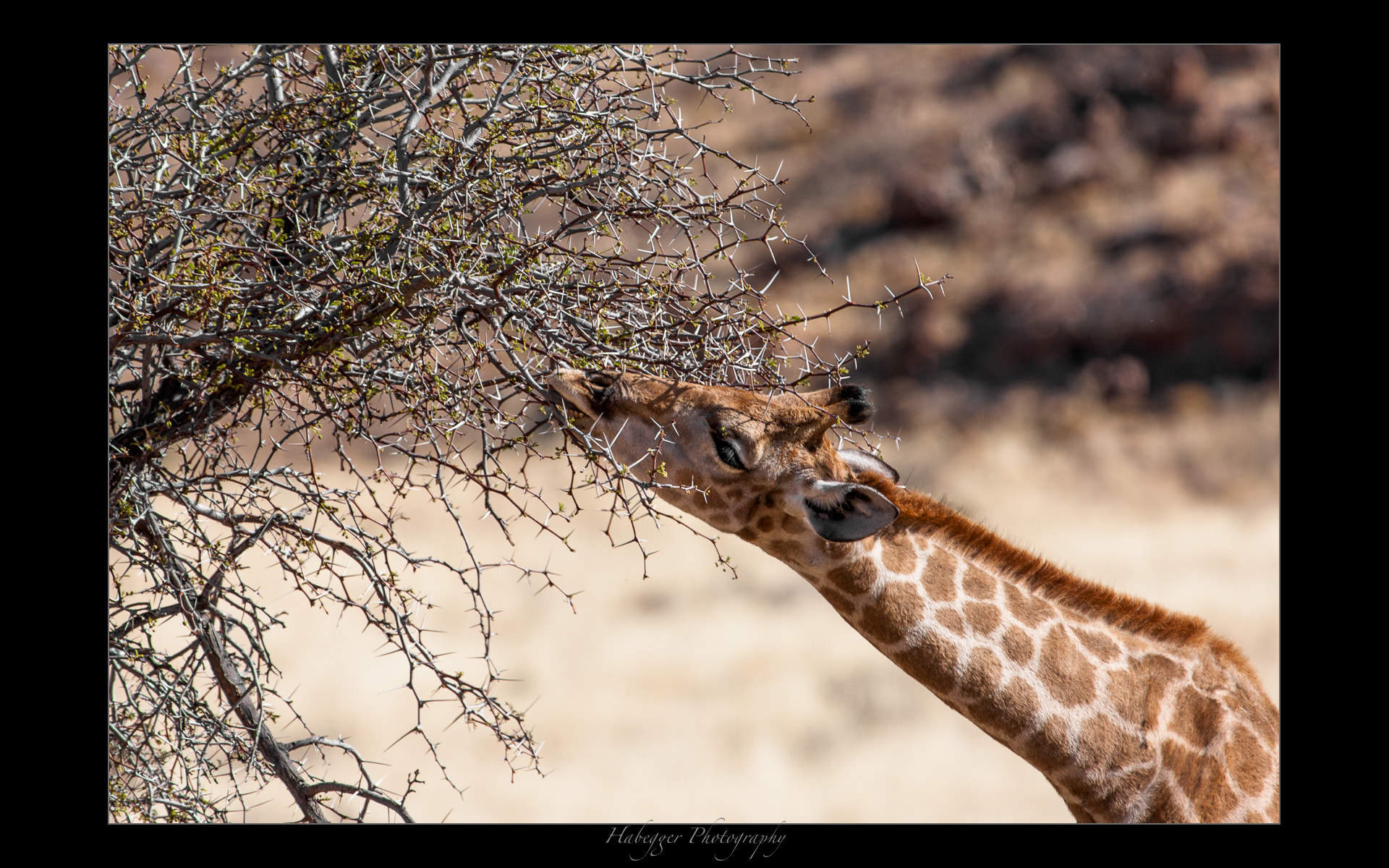 Photograph spiky snack by Chris Habegger on 500px