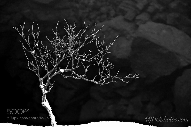 Photograph Tree by Jon Gretarsson on 500px