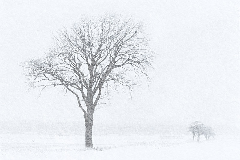 Photograph A white day by Winge on 500px