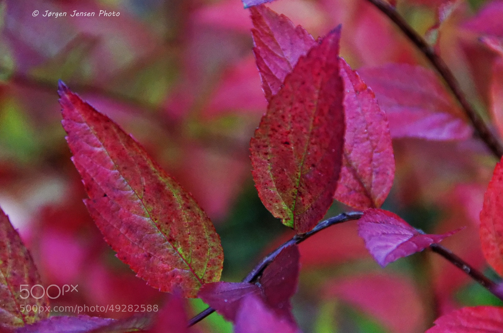 Photograph Red autumn by Jørgen Jensen on 500px
