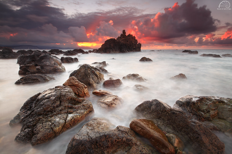 Photograph OUT, INTO THE WILD II by Raquel de Castro on 500px