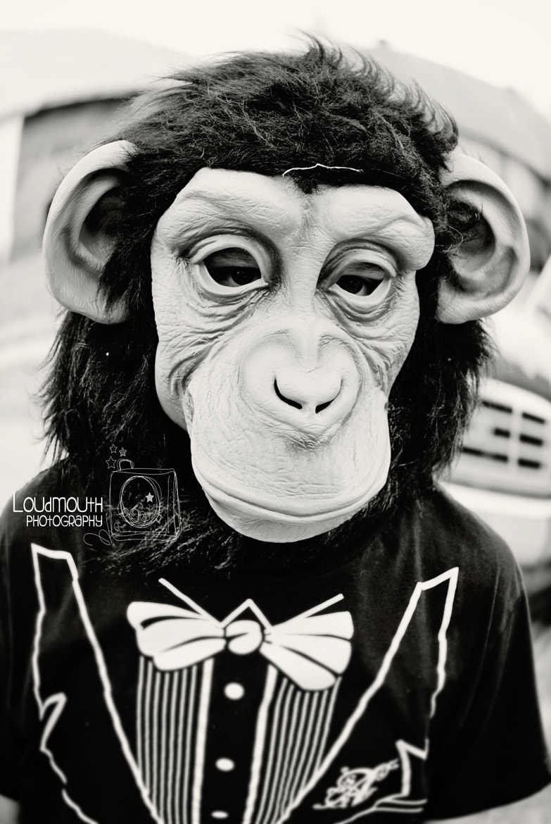 Photograph Chimp by Brandy A on 500px