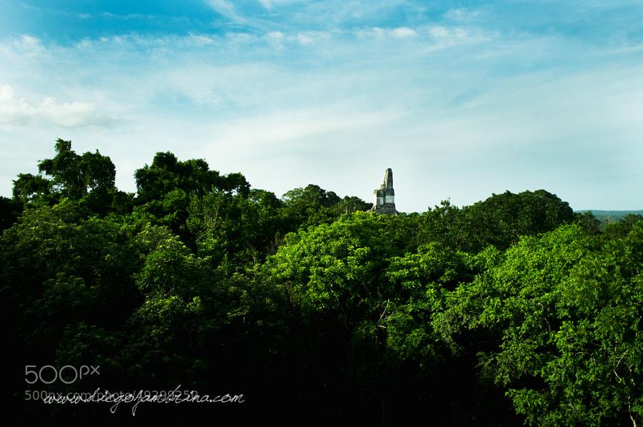 El templo Jaguar asoma entre la selva de Petén by Diego Jambrina on 500px.com