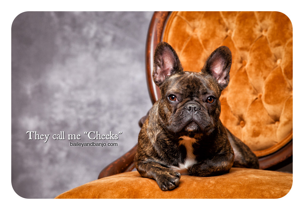 """Photograph They call me """"Cheeks"""". by Julie Clegg on 500px"""