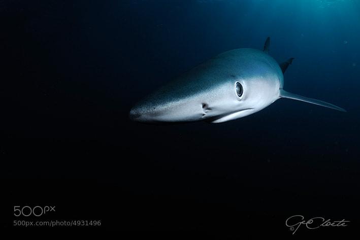 Photograph Blue Portrait  by Geo Cloete on 500px