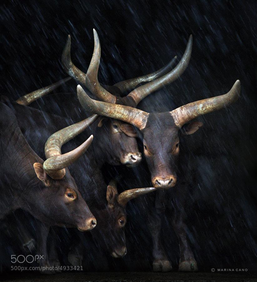 Rain by Marina Cano (MarinaCano) on 500px.com