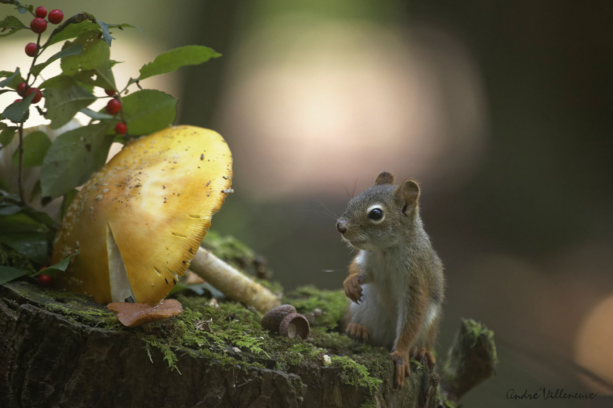 Photograph An edible umbrella by Andre Villeneuve on 500px