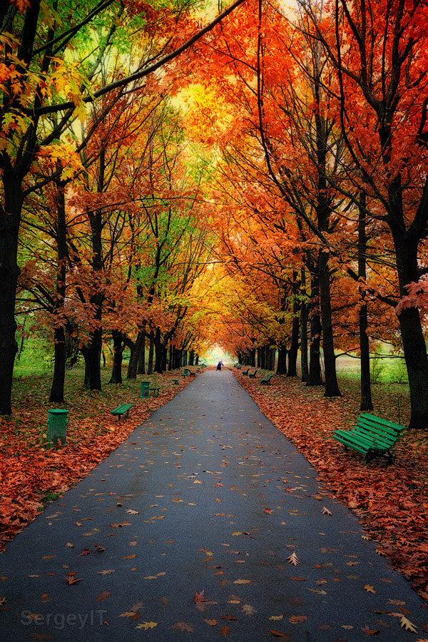 Photograph Autumn trees in park with colorful leaves by Sergiy Trofimov on 500px