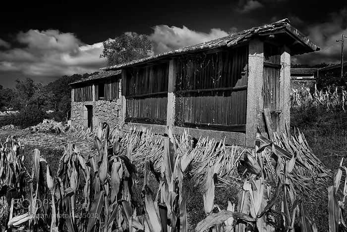 Photograph BW22 by MANUEL LAPIERRE on 500px