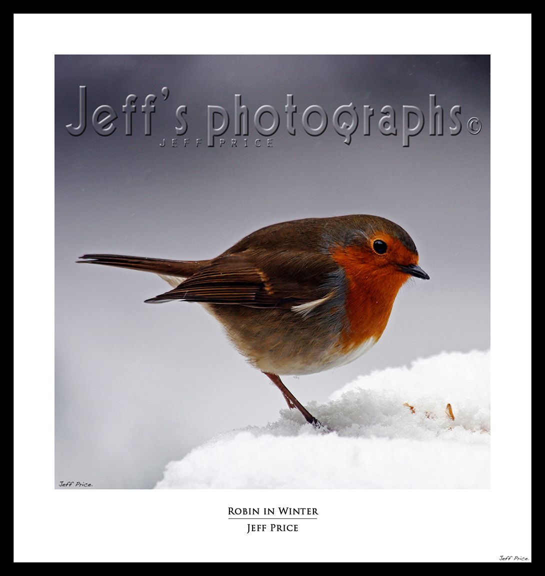 Photograph Robin in Winter by jeff price on 500px
