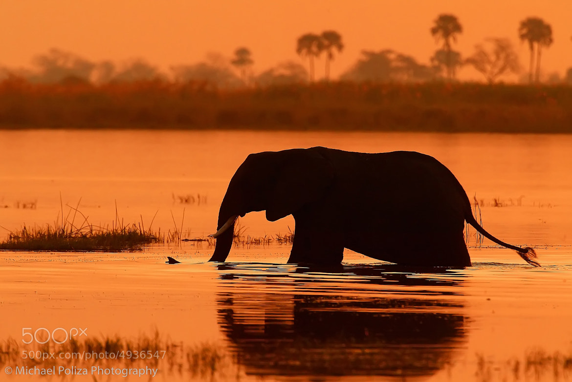 Photograph Bathing Elephant by Michael Poliza on 500px